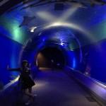 癒される!(≧∇≦)夜の水族館