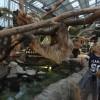 アルパカもカピバラも0距離!の動物園